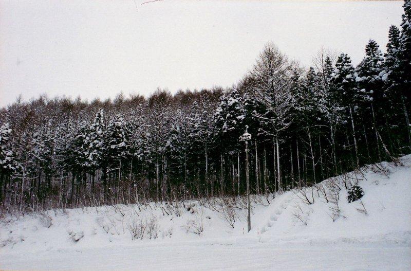 20080201_a1_003