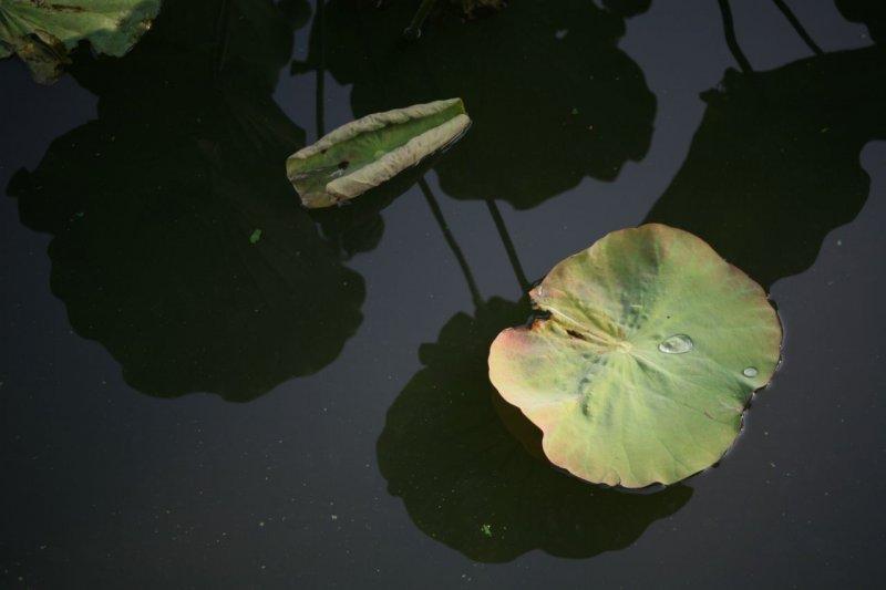 20080906-152002